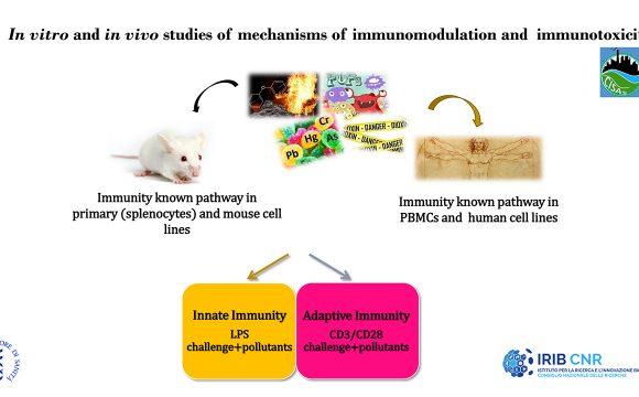 CISAS: Centro Internazionale di Studi Avanzati su Ambiente, ecosistema e Salute umana. WP 5 Task 5.3: Studi in vitro , ex vivo and in vivo di immunotossicità ed immunomodulazione